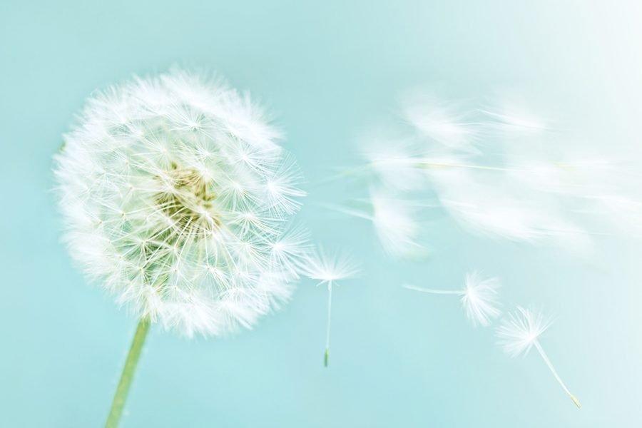 dandelion - repurposing content
